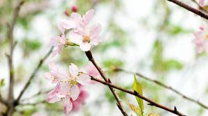 flowering-2554326__480